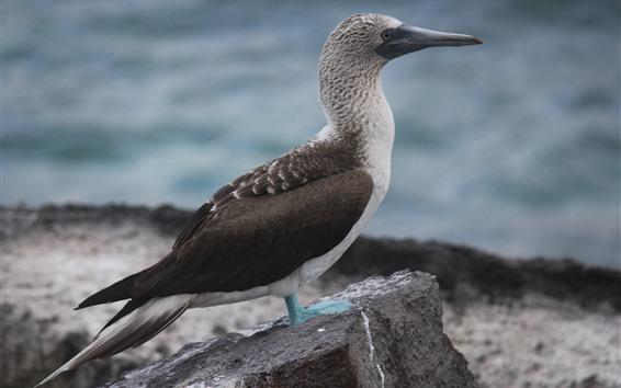Обои Одинокая птица, скала, море