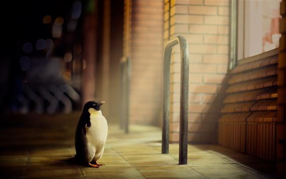 Papéis de Parede Pinguim solitário, olha, janela, raios de luz