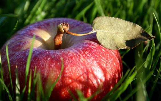 Fond d'écran Une pomme rouge, de l'herbe