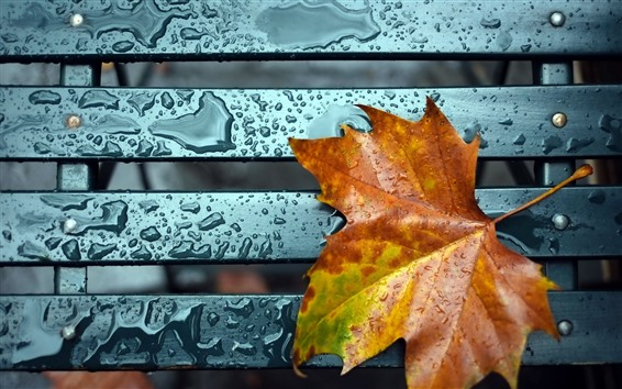 Wallpaper Orange maple leaf, water droplets, bench