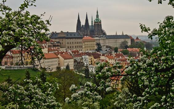 壁紙 プラハ、チェコ共和国、都市、花