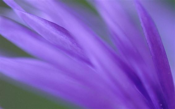 Fond d'écran Macro photographie de pétales violets, brumeux
