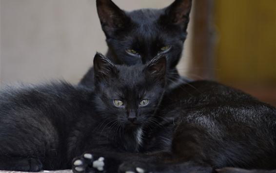 Papéis de Parede Dois gatos pretos