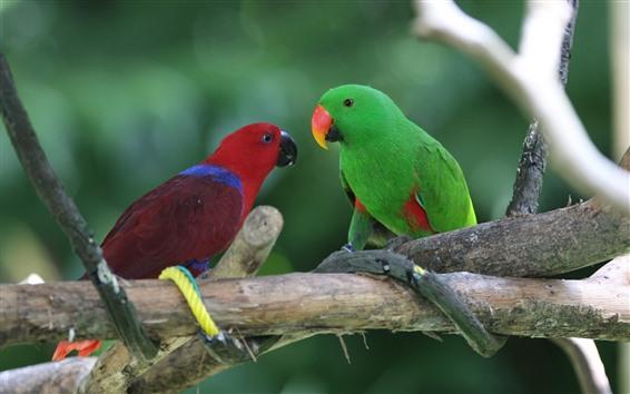 Papéis de Parede Dois papagaios, vermelho e verde