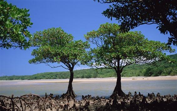 Fond d'écran Deux arbres, côte, mer, plage