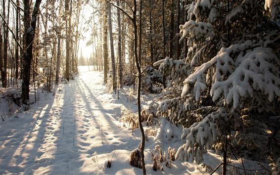 배경 화면 겨울, 눈, 나무, 숲, 태양 광선, 그림자
