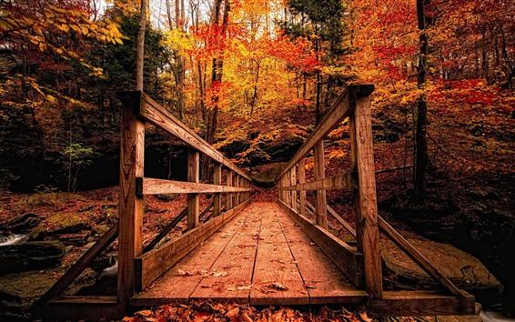 Обои Деревянный мост, деревья, красные листья, осень