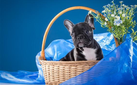 Papéis de Parede Cachorro preto, cesta, seda azul, flores