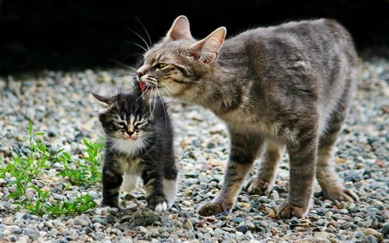 Обои Кошка и котенок, пушистые, туманные