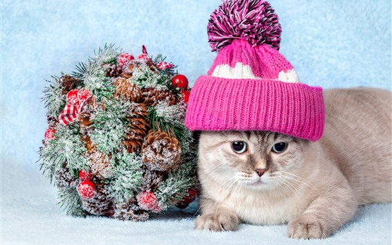 Fondos de pantalla Lindo gato, sombrero, nieve, decoración.