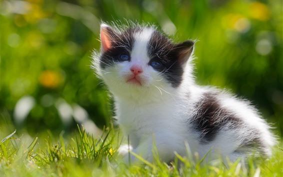 Fond d'écran Chaton mignon, bébé chat, herbe