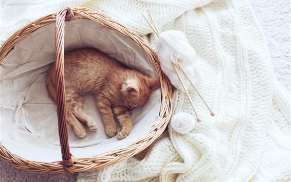 Обои Милый котенок спит в корзине, белый свитер