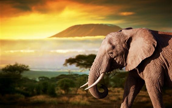 Fond d'écran Éléphant, Afrique, crépuscule
