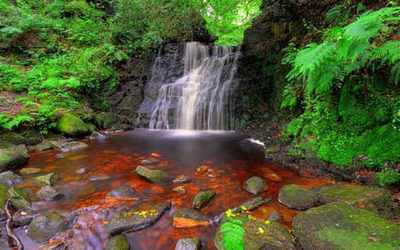 Hintergrundbilder England, Wasserfälle, Felsen, Pflanzen