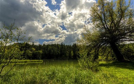 Fondos de pantalla Francia, árboles, verde, estanque, nubes, cielo, verano