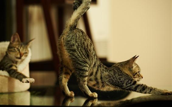 Обои Серый кот растягивается