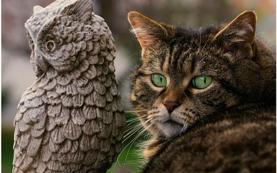 Papéis de Parede Gato de olhos verdes, estátua de coruja