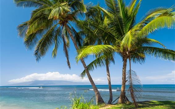 Papéis de Parede Havaí, palmeiras, mar, tropical, folhas, céu, EUA