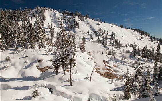 壁紙 ラッセン火山国立公園、木々、雪、冬、斜面、アメリカ