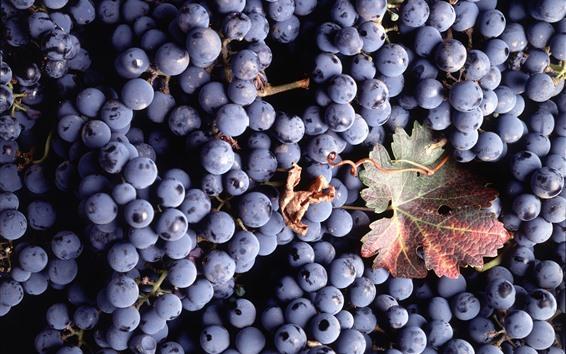 Papéis de Parede Muitas uvas roxas, uma folha