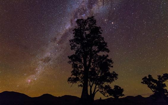 Fond d'écran Un arbre, silhouette, étoilé, étoiles, nuit