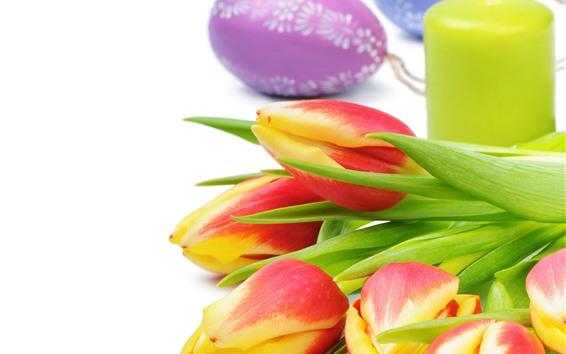 배경 화면 오렌지 튤립, 꽃, 부활절 달걀, 흰색 배경