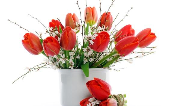 Обои Красные тюльпаны, белые цветы, ваза, белый фон