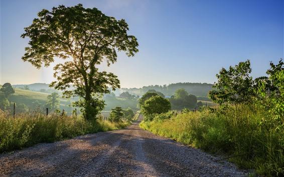 Wallpaper Road, trees, sun rays, village, morning