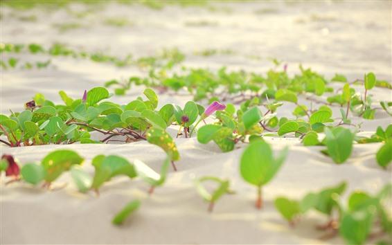 Обои Пески, зеленые листья, цветы