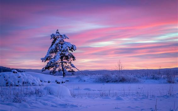 Papéis de Parede Suécia, árvore solitária, neve, inverno