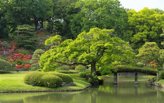 Fond d'écran Tokyo, jardin Rikugien, arbres, étang, parc, vert, Japon