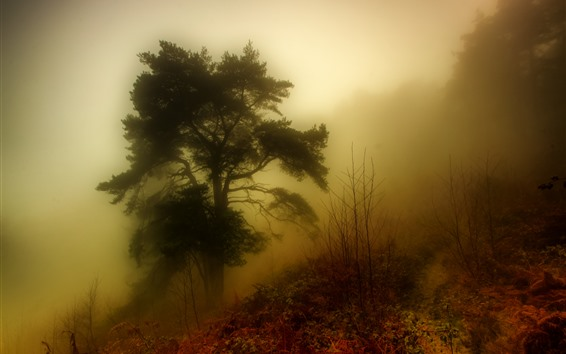 Papéis de Parede Árvore, nevoeiro, outono, manhã