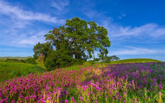 배경 화면 나무, 분홍색 꽃, 푸른 하늘