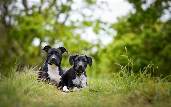 壁纸 两只黑狗,绿草