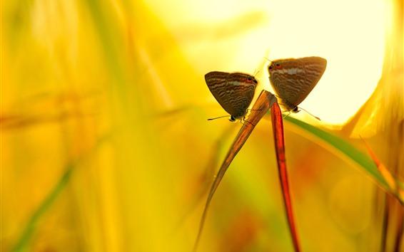 배경 화면 두 개의 나비, 잔디 잎, 백라이트