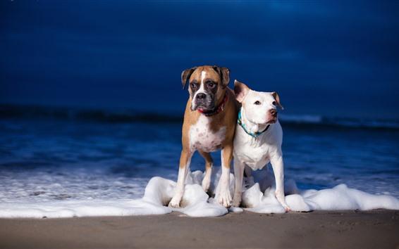 Papéis de Parede Dois cachorros, praia, espuma, mar