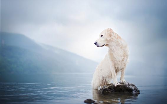 壁紙 白い犬、湖、岩