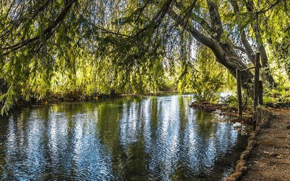 배경 화면 버드 나무, 나무, 강, 녹색 잎, 자연