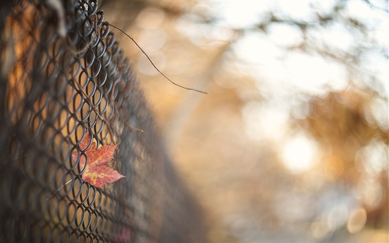 Wallpaper Wire fence, red maple leaf, hazy