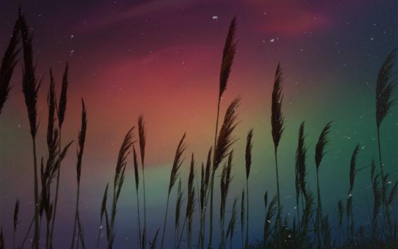 Wallpaper Aurora, reeds, stars, night
