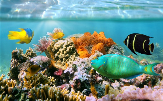 Wallpaper Coral, reef, underwater, tropical fish