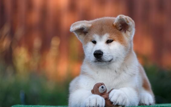 배경 화면 귀여운 강아지와 장난감 곰