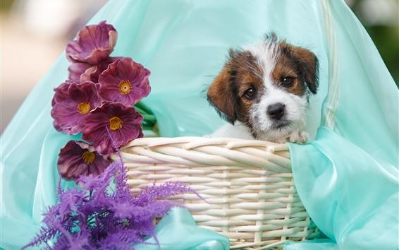 Papéis de Parede Cachorrinho fofo, cesta, flores roxas