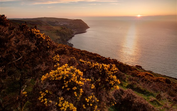 Wallpaper Exmoor National Park, sea, sunset, yellow flowers, UK