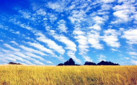 배경 화면 들판, 나무, 푸른 하늘, 구름