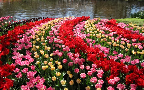 Papéis de Parede Holanda, jardins Keukenhof, tulipas, lagoa