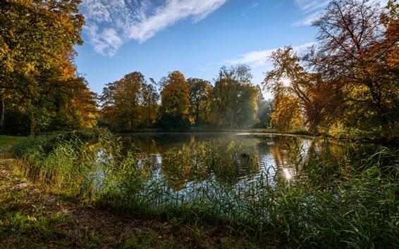 배경 화면 네덜란드, 공원, 연못, 잔디, 햇빛, 가을