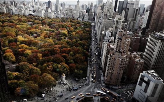 Обои Нью-Йорк, парк, деревья, город, небоскребы, дорога, автомобили, осень