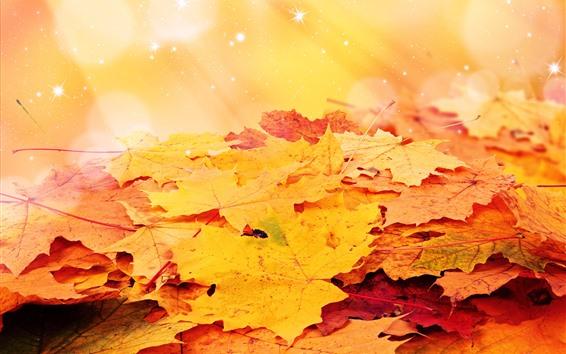 Wallpaper Orange maple leaves, stars, shine