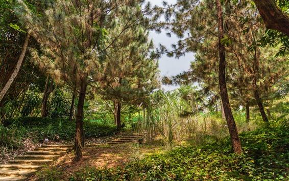 Wallpaper Park, trees, grass, steps